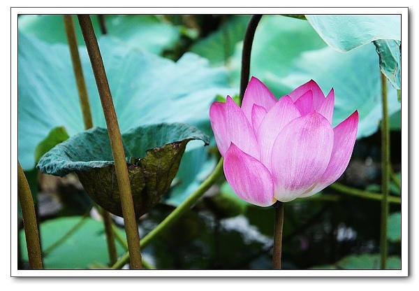 台北植物園-23.jpg