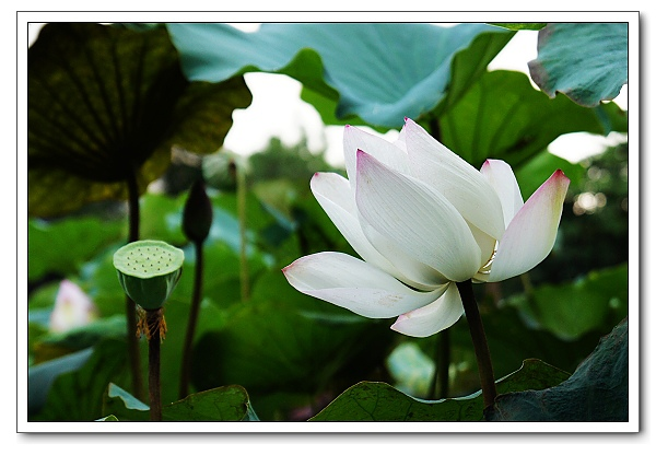 台北植物園-26.jpg