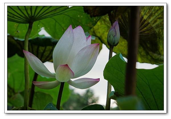 台北植物園-25.jpg