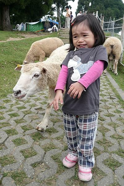 小羽球-0075小羽和綿羊.jpg