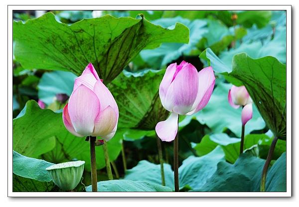 台北植物園-19.jpg
