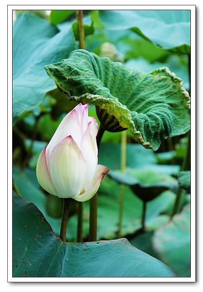 台北植物園-24.jpg
