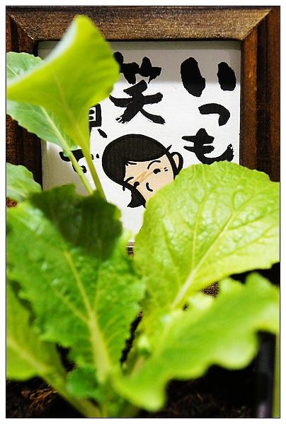 20101114花博-66.jpg