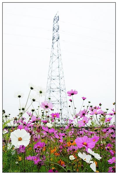 霧峰花湖-14.jpg