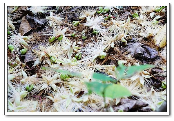 台北植物園-05.jpg