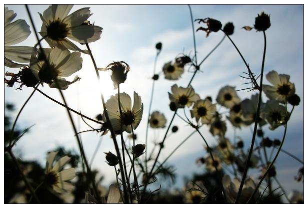 魔法農場-花草樹木07.jpg