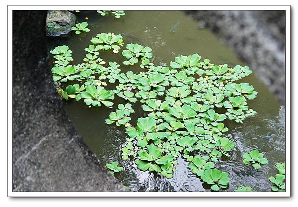 台北植物園-14.jpg