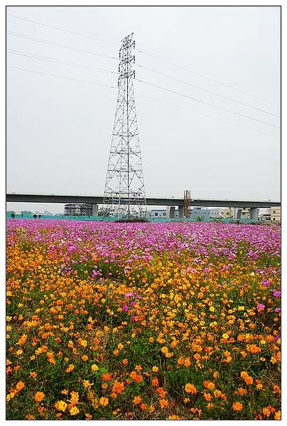 霧峰花湖-18.jpg
