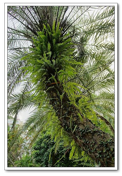台北植物園-01.jpg