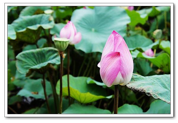 台北植物園-21.jpg