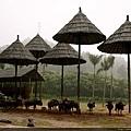 這是牠們的大雨傘