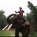 坐在大象身上的感覺