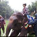 大象是我最喜歡的動物了 耶 太開心了這次