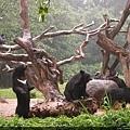 這是台灣黑熊嗎?