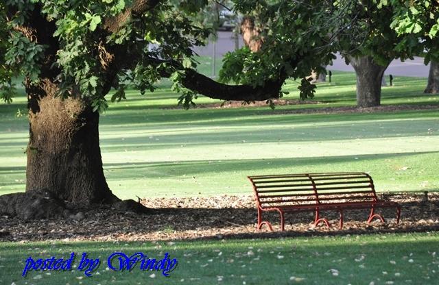 綠意盎然的King Park