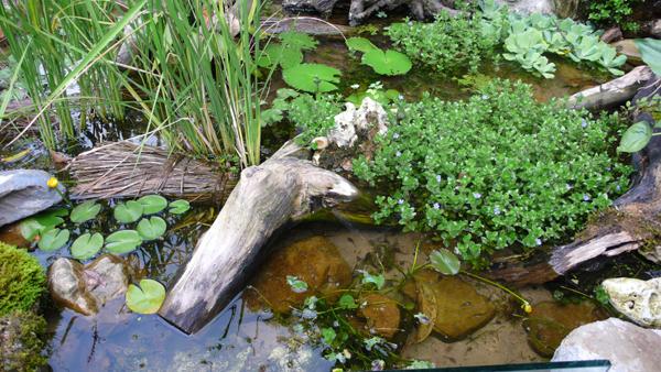 阿婆的生態池