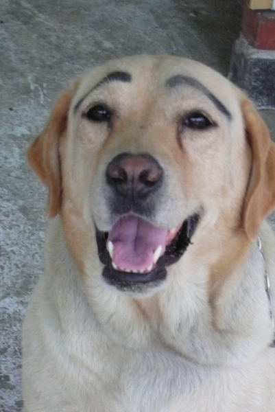 老闆啊  為何要幫狗畫眉呢??