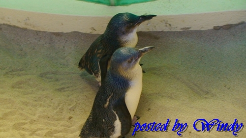 島上真的有企鵝耶