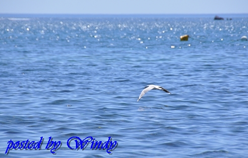 海鳥就從我身邊飛過,好奇妙的感覺