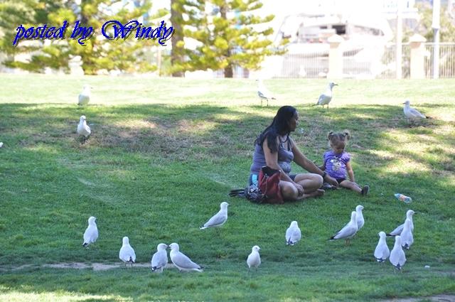 午餐有海鳥共伴