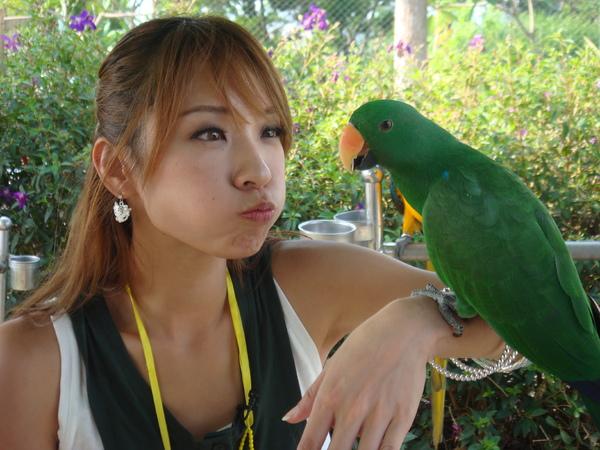 我:hello!  鸚鵡:......