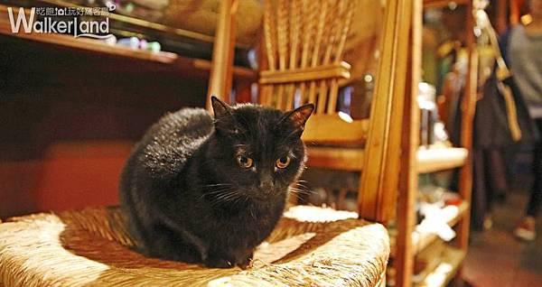 黑貓 ZABU食堂/咖啡烘培 士林 天母商圈 文青 下午茶 手作 輕食 甜點