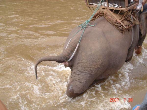 大象要大便了/0\