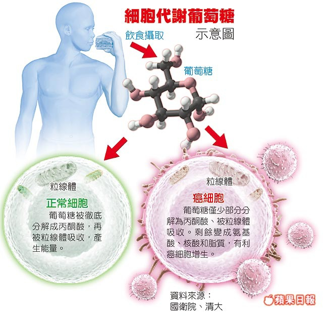 細胞代謝葡萄糖示意圖