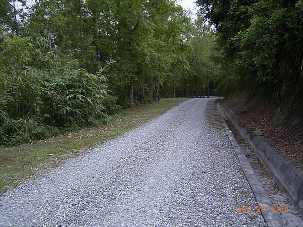 縣197-要進入森林了,山溝感覺會比道路好騎,恨不得把機車騎到山溝裡