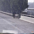 高速公路旁隨時有「路人」在走動