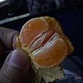 大陸的小橘子!真的是橘子喲!