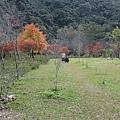 2010.11.19 奧萬大森林遊樂區 (20).JPG