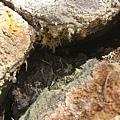 2010.07.03 新北投_地熱谷_壁牆上的硫磺結晶 (7).JPG