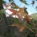 2010.11.19 奧萬大森林遊樂區 (10).JPG