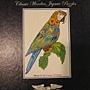 2011.09.29 314 pcs Macaw (2).jpg