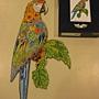 2011.09.29 314 pcs Macaw (13).jpg