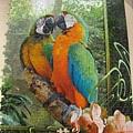 2012.08.17 1000P Cozy Macaws (1)