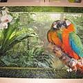 2012.08.17 1000P Cozy Macaws (2)