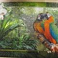 2012.08.17 1000P Cozy Macaws (10)