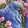2012.09.14 1000P Blaue Papageien (1)