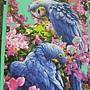2012.09.14 1000P Blaue Papageien (3)