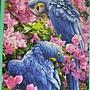 2012.09.14 1000P Blaue Papageien (4)