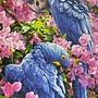 2012.09.14 1000P Blaue Papageien (5)