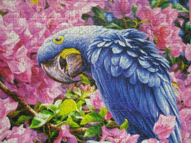 2012.09.14 1000P Blaue Papageien (6)