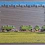 2013.12.14 150P Qinghai - The Sea of Rape Flowers (2).jpg