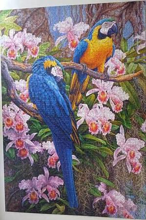 2013.12-2014.05 1500pcs Parrots and orchids