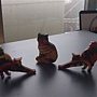 2014.09.13 220pcs Tapestry Cat (2).jpg