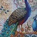 2014.09.27 500pcs Royal Peacock (4).jpg
