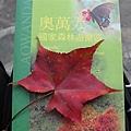 2010.11.19 奧萬大森林遊樂區 (42).JPG
