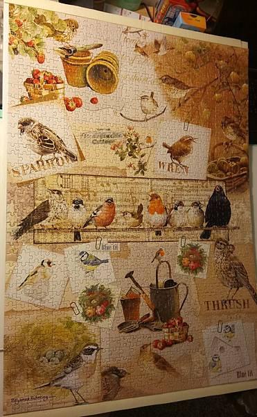 2016.12.24 1000pcs Garden Birds (1).jpg
